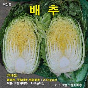 [농할쿠폰20%] 꼬레촌엽채 통배추 1포기 1.8kg(고랭지)~2.5kg이상