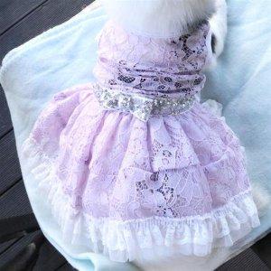 공주 스타일 xs강아지옷 강아지옷 프린센스 원피스