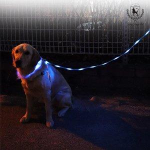 딩동펫 반려동물 애완 LED플래쉬 목줄 세트
