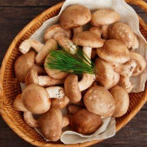 송이향 표고버섯 경북안동 초가송이버섯 (알뜰형)