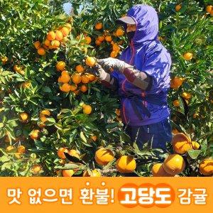 [농할쿠폰20%] 제주꿀덩이삼촌 노지감귤 로얄과 5kg 10kg 당일수확