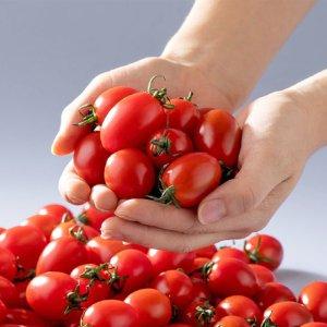 [농할쿠폰20%] [남도장터]바른팜 맛있는 방울 토마토 2kg/5kg