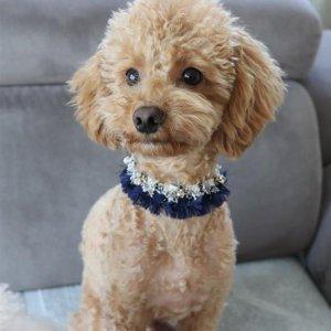 고급 스카프 스타일 편한 강아지목걸이 이름표 트위트