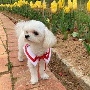 예쁜 세라 케이프 강아지봄옷 스카프 턱받이 악세사리