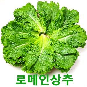 [농할쿠폰20%] 로메인2kg  로메인상추 웰빙 쌈채소 싱싱지오