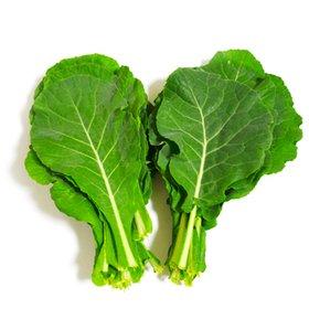 [농할쿠폰20%] 유기농  케일 1kg /쌈채소