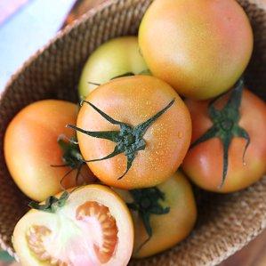 [농할쿠폰20%] 스테비아 정품 토망고(토마토+망고) 1kg (4-8과)