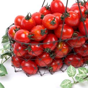경남 대추방울토마토 2kg 당일수확