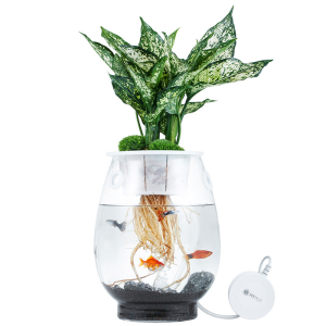 거실인테리어 수경재배 가습식물 화분 홈가드닝