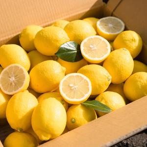 [제주농협] 레몬2.5kg(10-17입,개당150-250g)