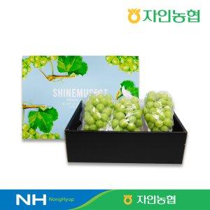 [자인농협] 달콤 샤인머스켓 선물세트 2kg 내외(3수)