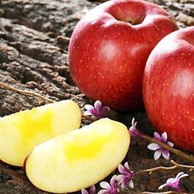 [농할쿠폰20%] 청송 햇사과 사과 10kg 5kg