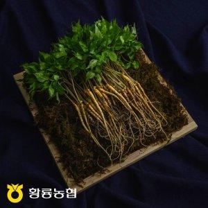 [농할쿠폰20%] 황룡농협 새싹삼 새싹인삼 한뿌리인삼 50뿌리 소