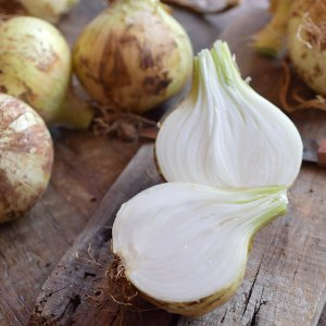 [농할쿠폰20%] 싱싱아삭 햇 양파 5kg 특 사이즈 무배