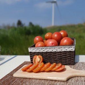 [농할쿠폰20%] [남도장터]푸르름 최상품 진상토마토 (2~3번 2.5kg)