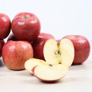 [농할쿠폰20%] 아삭한 햇 사과 10kg 실중량
