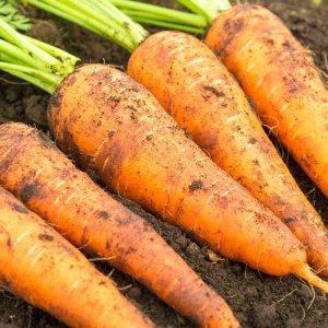 김해 흙 당근 3kg