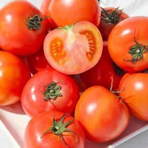 [농할쿠폰20%] 완숙 토마토 5kg 실중량