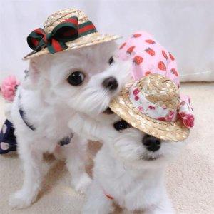 바캉스룩 강아지 밀짚모자 애견모자 놀러가서 예쁘개