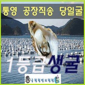 [수산쿠폰20%] [굴철철]통영1등급 생굴3kg/공장직배송/당일굴직송