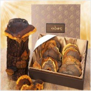 안동 상황버섯 약용 목질진흙 상항버섯 명품 선물 1kg
