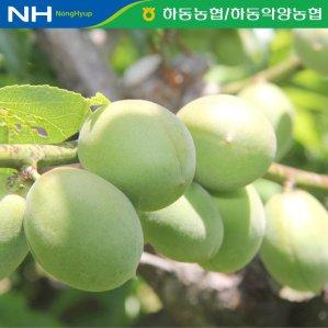 [농할쿠폰20%]  공동선별 하동농협 청매실 10kg