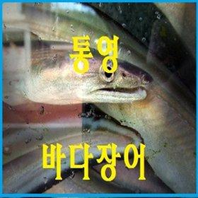 [수산쿠폰20%] [굴철철]통영 자연산 주낚바다장어/3~5kg/키로4~6미