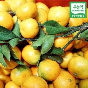 [푸른들] 무농약 제주감귤 5kg (랜덤과 / 노지감귤)