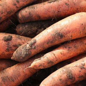 [농할쿠폰20%] 드림컴퍼니 흙당근 싱싱하고 맛있는 당근 햇당근