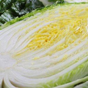 [농할쿠폰20%] HACCP인증 아삭아삭 해남 절임배추 20kg