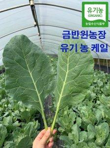 [농할쿠폰20%] 유기농 케일 쌈/즙/쥬스용 독소배출왕 농장직배소