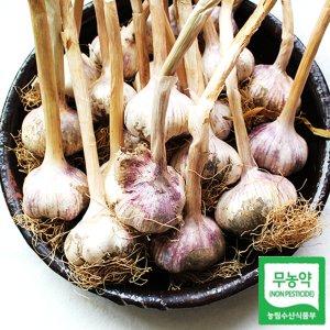서산 무농약 마늘 햇 통마늘 50개(반접) 대
