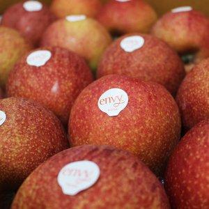 [농할쿠폰20%] [envy] 사과계의 명품 엔비사과 5,10kg