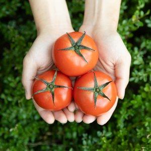 [농할쿠폰20%] 스테비아토마토 토망고 1kg+1kg