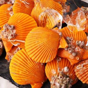 싱싱하고 알이굵은 통영 황금가리비 1kg