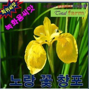 희귀씨앗 녹화용씨앗   노랑꽃창포   씨앗1kg