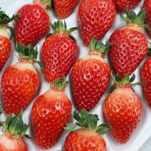 우리땅 싱싱한 금실 허니 딸기 1kg