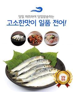 [수산쿠폰20%] 20년 어획 제철 햇 전어 15미 1kg