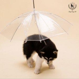 딩동펫 반려동물 강아지 산책용 우산