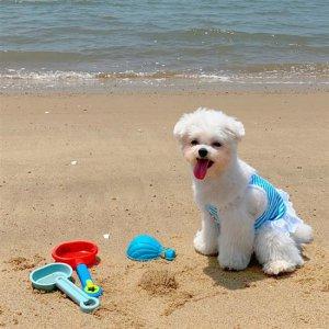고급 면 소재 강아지옷2xl 여름옷 비키니 수영복