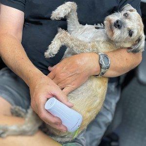 반려동물 통증 LED 라이트테라피 루마수드 lumasoothe