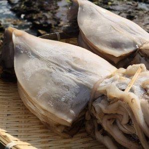 [수산쿠폰40%] 반건조 오징어 대 10미 1.4kg내외/반건조/오징어/국내산