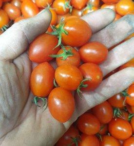 [농할쿠폰20%] 대추 방울 토마토 큰것 작은것 2kg