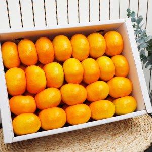 제주 하우스감귤 선물세트 5kg(31-40과)